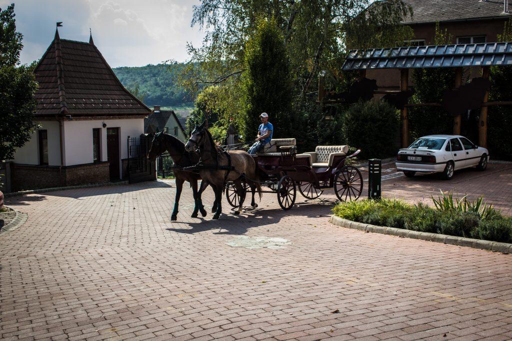Lovaskocsikázás a kastélyparkban és környékünkön