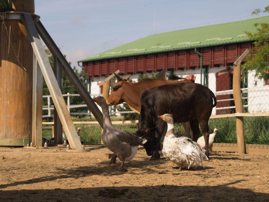 Állatsimogató: mindenféle farm állatokkal