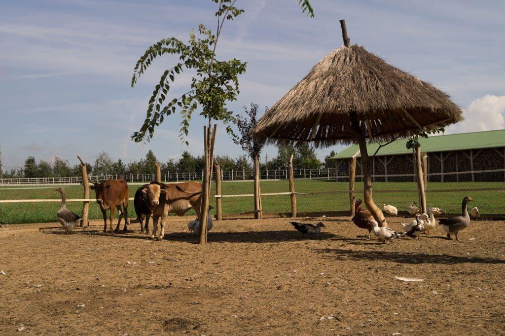 Teljes állattartás: állatsimogatónk lakói