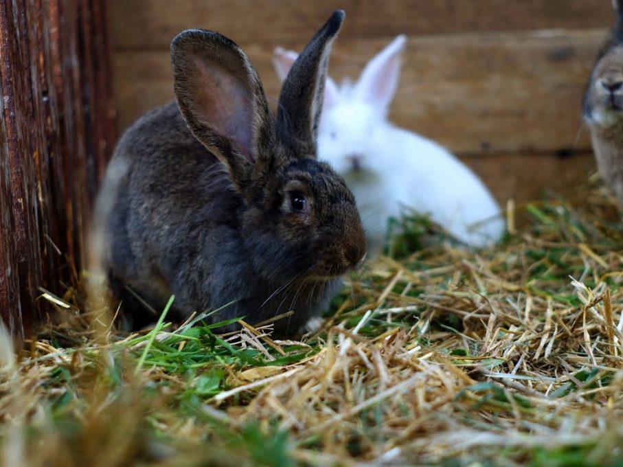 Nyuszisimogatás Húsvétkor: állatsimogatónk lakói várják a kicsiket és nagyokat