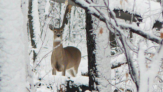 A Bükk élővilága vonzó lehet a kirándulóknak és a vadászoknak egyaránt