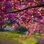 Tavaszi hangulatkép